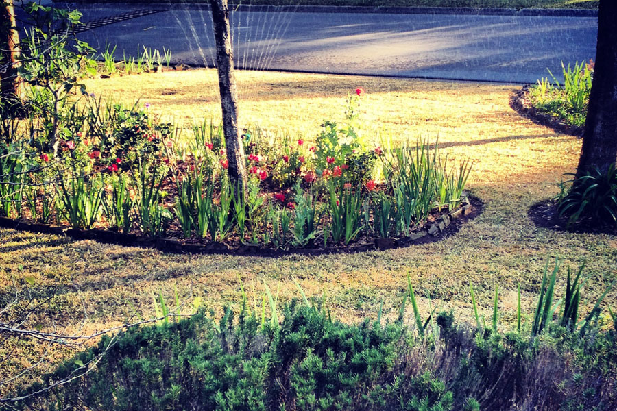 Landscaping For Privacy Deep South Landscaping